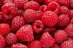 Предпосылка от ягод поленики Стоковая Фотография RF