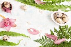 Предпосылка пасхи с листьями папоротника, яичками триперсток и орхидеями стоковое фото
