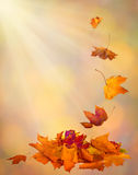 Предпосылка падения осени листьев осени в винтажной концепции осени стиля Стоковые Изображения RF