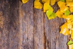 Предпосылка падения осени стоковое фото
