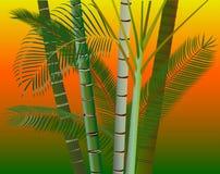 Предпосылка пальм Стоковая Фотография