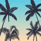 Предпосылка пальм Стоковые Изображения RF