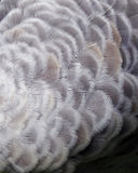 Предпосылка пера крана Sandhill Стоковое фото RF