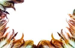 Предпосылка пера птицы Стоковые Изображения RF