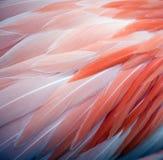 Предпосылка пера фламинго Стоковая Фотография RF