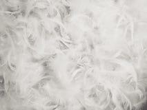 Предпосылка пера цыпленка Стоковое Изображение RF