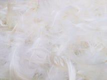 Предпосылка пера цыпленка Стоковые Фотографии RF