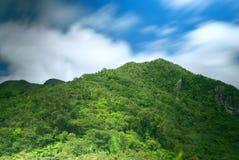 Предпосылка перемещения природы конспекта †горного вида тропического леса « Стоковое Изображение RF