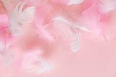 Предпосылка пер абстрактная Предпосылка для дизайна с мягким colorfull оперяется картина Мягкие пушистые пер дальше стоковая фотография rf