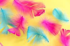Предпосылка пер абстрактная Предпосылка для дизайна с мягким colorfull оперяется картина Мягкие пушистые пер на бирюзе, дне d стоковые изображения rf