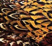 Предпосылка пер птицы Стоковое Фото