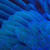 Предпосылка пер птицы Стоковое Изображение