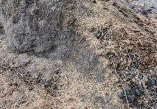 Предпосылка питательного вещества почвы Стоковые Изображения RF