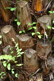Предпосылка пня дерева Стоковое Изображение