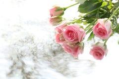 Предпосылка подачи розы и воды пинка стоковые фотографии rf