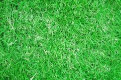 Предпосылка поля травы Стоковые Фотографии RF