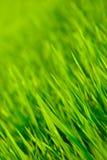 Позеленейте предпосылку Стоковые Фото