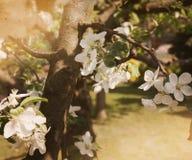 Предпосылка природы год сбора винограда Стоковые Фото
