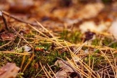 Предпосылка природы леса осени Стоковое Фото