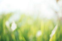 Предпосылка природы запачканная зеленым цветом стоковые фотографии rf
