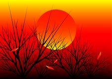 Предпосылка природы захода солнца Стоковое Изображение