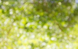Предпосылка природы зеленая несосредоточенная Стоковое Изображение