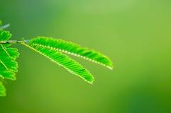 Предпосылка природы лист зеленая Стоковые Фотографии RF