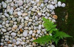 Предпосылка природы и камень текстуры, папоротник, мох Стоковое Фото