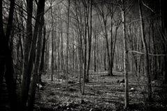 Предпосылка природы мертвого леса черно-белая Стоковые Изображения