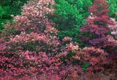 Предпосылка природы осени с красочными листьями на ветви в передних частях Стоковые Фото