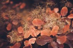 Предпосылка природы осени с красочными листьями на ветви сфокусируйте мягко Стоковая Фотография