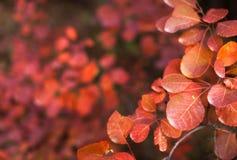Предпосылка природы осени с красочными листьями на ветви сфокусируйте мягко Стоковое фото RF