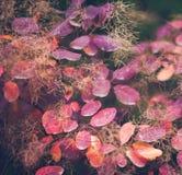 Предпосылка природы осени с красочными листьями на ветви сфокусируйте мягко Стоковые Изображения