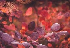 Предпосылка природы осени с красочными листьями на ветви сфокусируйте мягко Стоковые Фотографии RF
