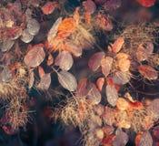 Предпосылка природы осени с красочными листьями на ветви сфокусируйте мягко Стоковые Фото
