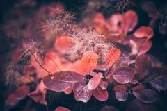 Предпосылка природы осени с красочными листьями на ветви сфокусируйте мягко Стоковое Изображение