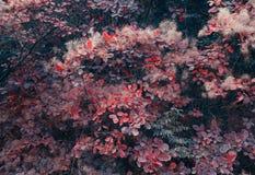Предпосылка природы осени с красочными листьями на ветви сфокусируйте мягко Стоковое Фото