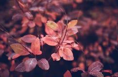 Предпосылка природы осени с красочными листьями на ветви сфокусируйте мягко Стоковое Изображение RF