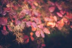 Предпосылка природы осени с красочными листьями на ветви сфокусируйте мягко Стоковая Фотография RF