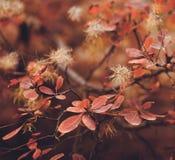 Предпосылка природы осени с красочными листьями на ветви сфокусируйте мягко Стоковые Изображения RF