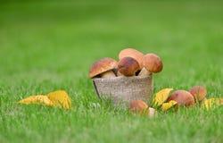 Предпосылка природы подосиновика гриба edulis Стоковое Фото