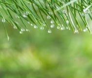 Предпосылка природы росы утра Стоковая Фотография RF