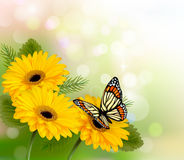 Предпосылка природы с желтыми красивыми цветками Стоковое Изображение RF