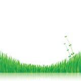 Предпосылка природы с зеленой травой Стоковое фото RF
