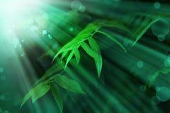 Предпосылка природы с зелеными листьями дерева Стоковая Фотография RF
