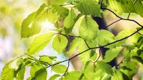 Предпосылка природы с зеленым цветом выходит на солнечный день 4K акции видеоматериалы