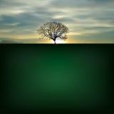 Предпосылка природы с силуэтом дерева Стоковая Фотография RF