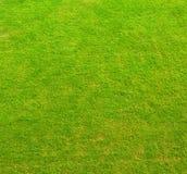 Текстура зеленой травы Стоковые Изображения
