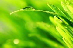 Предпосылка природы травы стоковое изображение