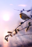 Предпосылка природы утра весны искусства красивая Стоковое Изображение RF